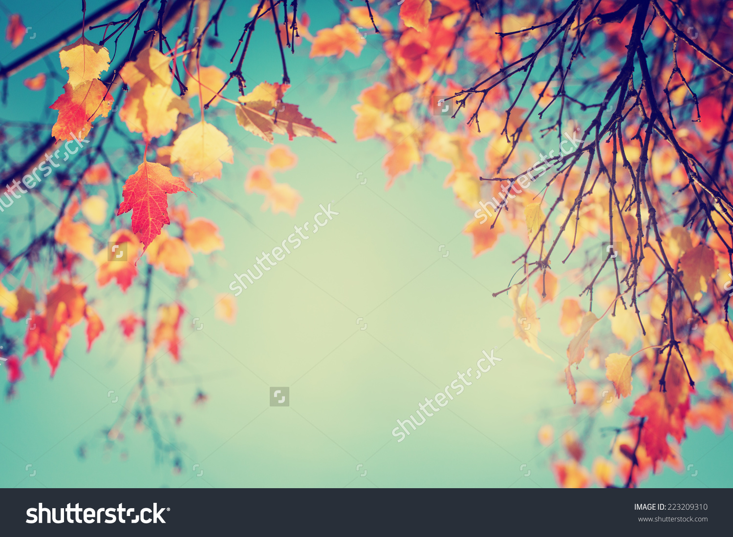 stock-photo-colorful-foliage-in-the-autumn-park-autumn-leaves-sky ...